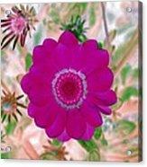 Flower Power 1439 Acrylic Print