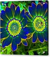 Flower Power 1446 Acrylic Print