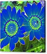 Flower Power 1451 Acrylic Print