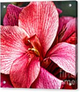 Flower Power In Pink By Diana Sainz Acrylic Print
