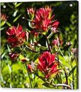 Flower Acrylic Print by Scott Gould
