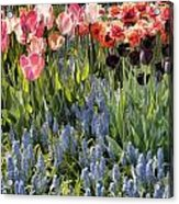 Flower Splash Viii Acrylic Print