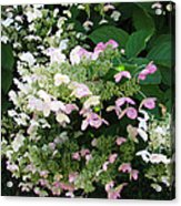 Flower Spray Acrylic Print