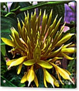 Flower - Sultry Dahlia - Luther Fine Art Acrylic Print