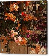 Flower Trellis In La Jolla Acrylic Print