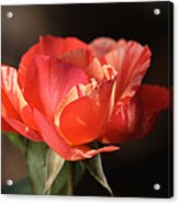Flower-tri Toned-rose Acrylic Print