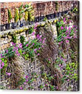 Flower Wall Along The Arno River- Florence Italy Acrylic Print