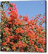 flower wall in Madagascar Acrylic Print