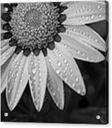 Flower Water Droplets Acrylic Print