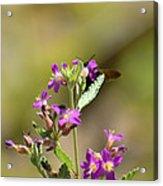 Flower With Bee Acrylic Print