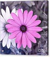 Flower15 Acrylic Print