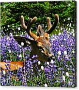 Flowerbed Acrylic Print by Heike Ward