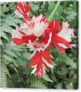 Flowerbird Zen Fancy  Acrylic Print