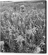 Flowered Field Acrylic Print