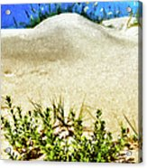 Flowering Dunes - Outer Banks Acrylic Print by Dan Carmichael