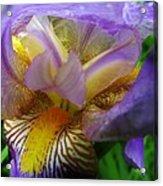 Flowering Iris Acrylic Print