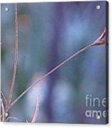 Flowering Moss Acrylic Print