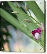 Flowering  Orchid Stem Acrylic Print