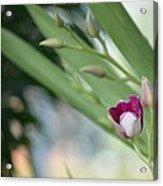 Flowering  Orchid Stem Acrylic Print