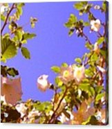 Flowering Tree 2 Acrylic Print