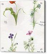 Flowers 1931 Acrylic Print