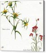 Flowers 1950 Acrylic Print