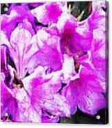 Flowers 2078 Oil Hp Acrylic Print