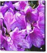 Flowers 2078 Pastel Chalk 2 Acrylic Print