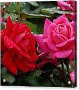 Flowers 521 Acrylic Print