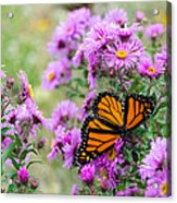Flowers And Butterfly  Acrylic Print