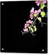 Flowers And Darkness Acrylic Print