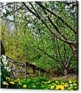 Flowers And Fence Acrylic Print