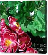 Flowers And Leaves Acrylic Print