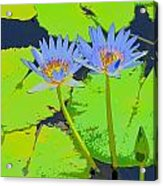 Flowers And Lily Pads Acrylic Print