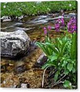Flowers And Stream Acrylic Print