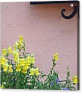 Flowers And Window Frame Acrylic Print