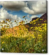 Flowers Are Food For The Soul  Acrylic Print