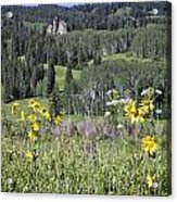Flowers At Crested Butte Acrylic Print
