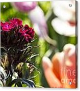 Flowers At Dallas Arboretum V13 Acrylic Print