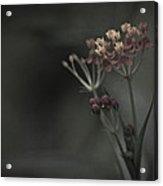 Flowers At Dusk Acrylic Print