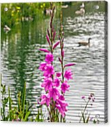 Flowers At The Lake Acrylic Print