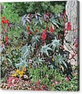 Flowers Acrylic Print by Peter Jackson