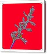 Flowers- Btb 2 Acrylic Print