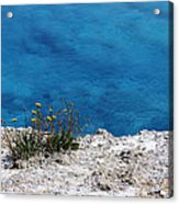 Flowers By The Blue Acrylic Print