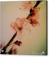 Flowers - Cherry Blossoms - Blooms Acrylic Print