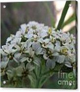 Flowers Close-up Acrylic Print