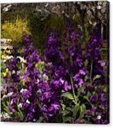 Flowers Dallas Arboretum V18 Acrylic Print