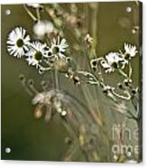 Flowers End Acrylic Print