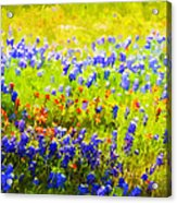 Flowers Field Background Acrylic Print