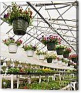 Flowers Growing In Foil Hothouse Of Garden Center Acrylic Print